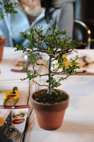 img_yuzu_bonsai_09.jpg