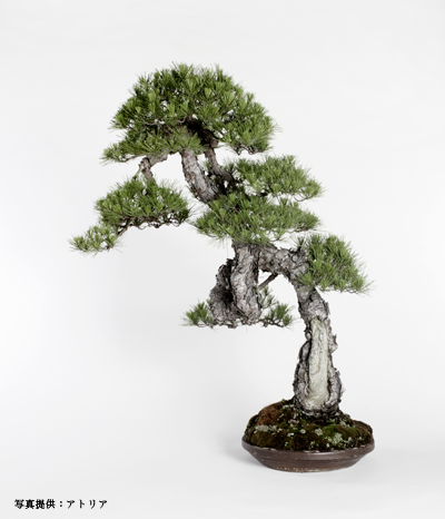 bonsai_1305_400_01.png